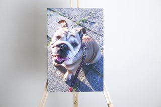 Obrázek pes 30x45.jpg