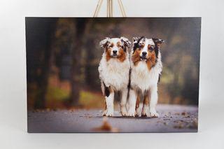 Obrázek dva psi.jpg