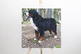 Obrázek pes.jpg