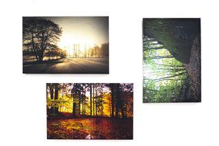 Obrázek kolekce z přírody.jpg